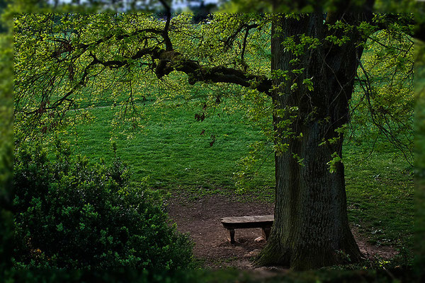 Rendezvous unter dem Fledermausbaum - © Helga Jaramillo Arenas - Fotografie und Poesie / Mai 2012