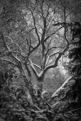 Das Herz der Bäume (2) - © Helga Jaramillo Arenas - Fotografie und Poesie / März 2016