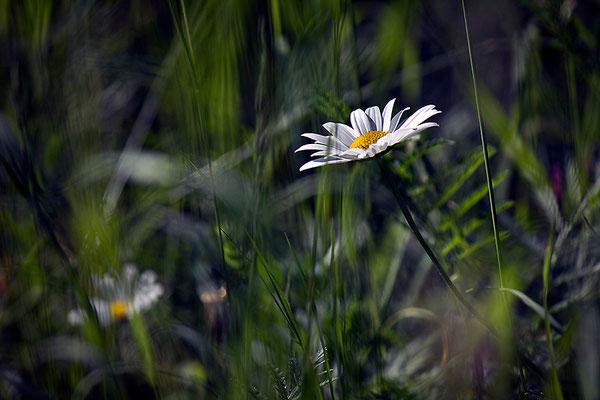 Bescheidenheit - © Helga Jaramillo Arenas - Fotografie und Poesie / Juni 2014