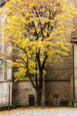 Die Wärme des Baumes / Öhringen - © Helga Jaramillo Arenas - Fotografie und Poesie / November 2018