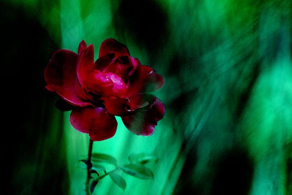 Lichteregen - © Helga Jaramillo Arenas - Fotografie und Poesie / November 2017
