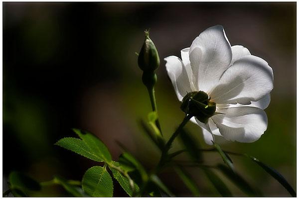 Ein Hauch von Zärtlichkeit - © Helga Jaramillo Arenas - Fotografie und Poesie / September 2012