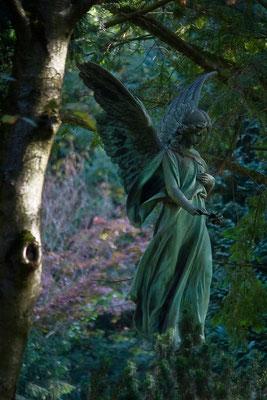Aus der Stille hervorgetreten - © Helga Jaramillo Arenas - Fotografie und Poesie  / Oktober 2012