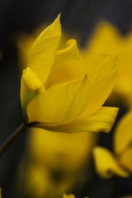 Vom Frühling Geschickt (4) - © Helga Jaramillo Arenas - Fotografie und Poesie / April 2017