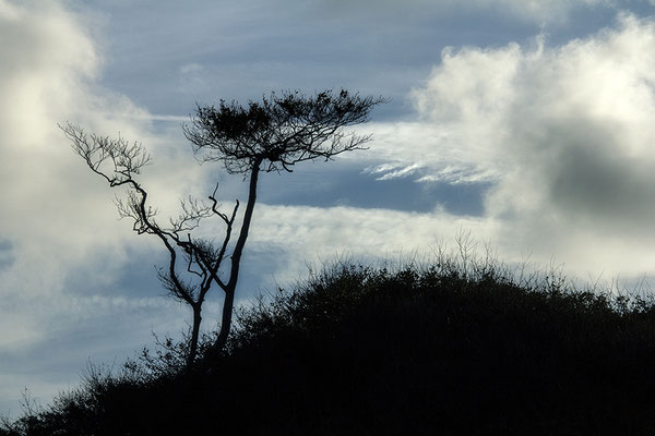 Windgewalten - © Helga Jaramillo Arenas - Fotografie und Poesie / Januar 2019