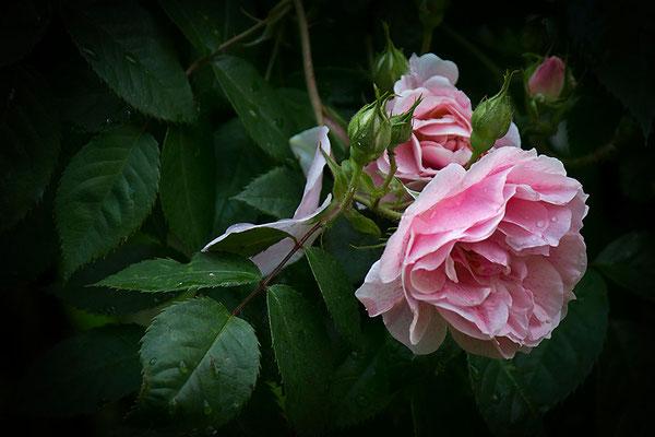 Nach dem Regen - © Helga Jaramillo Arenas - Fotografie und Poesie / September 2013
