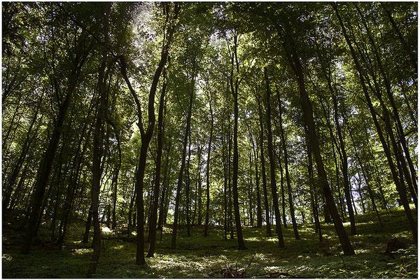 Lichterwald - © Helga Jaramillo Arenas - Fotografie und Poesie / Juli 2012
