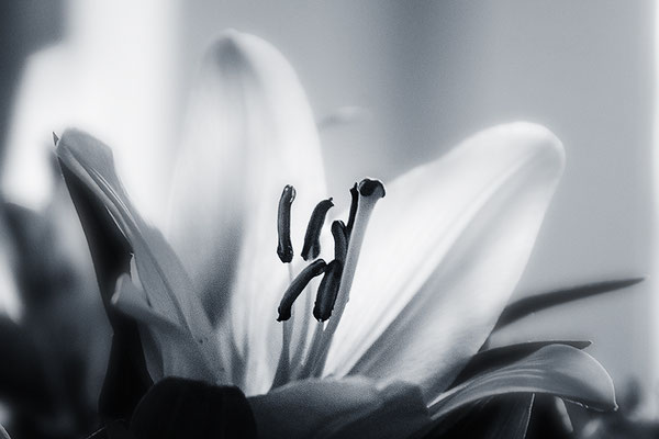 Diskret - © Helga Jaramillo Arenas - Fotografie und Poesie / April 2018