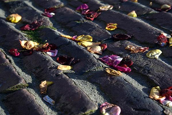 Auf Rosen wandeln - © Helga Jaramillo Arenas - Fotografie und Poesie / Oktober 2011