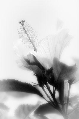 Berührung (1) - © Helga Jaramillo Arenas - Fotografie und Poesie / September 2018