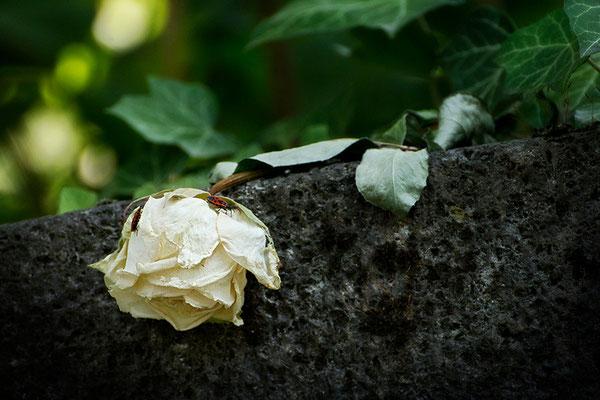 Boten der Vergänglichkeit - © Helga Jaramillo Arenas - Fotografie und Poesie / August 2015