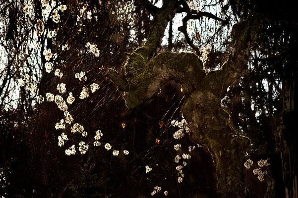 Winterleuchten - © Helga Jaramillo Arenas - Fotografie und Poesie / Januar 2011