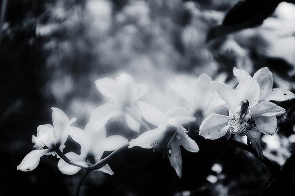 Umwölkt - © Helga Jaramillo Arenas - Fotografie und Poesie / Februar 2017
