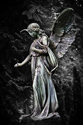Der Verlust der Rose - © Helga Jaramillo Arenas - Fotografie und Poesie / Juni 2012