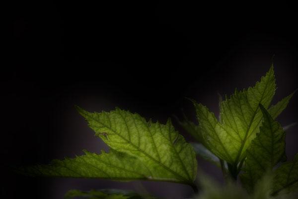 Es bleibt das Licht -  © Helga Jaramillo Arenas - Fotografie und Poesie / Januar 2021