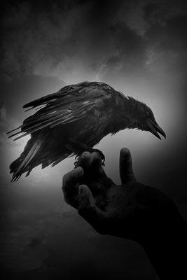 Botschafter aus der Schattenwelt - © Helga Jaramillo Arenas - Fotografie und Poesie / Oktober 2015