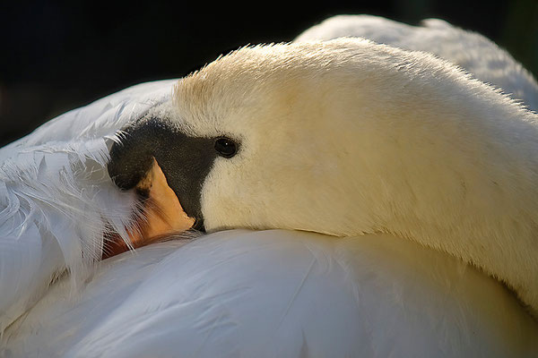 """""""Gute Nacht!"""" - © Helga Jaramillo Arenas - Fotografie und Poesie / Mai 2012"""