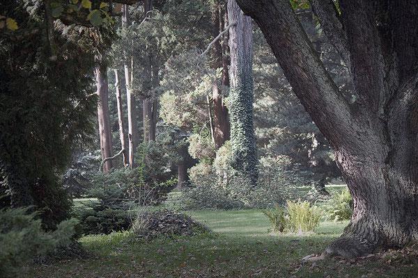 Die Erzählungen der Bäume - © Helga Jaramillo Arenas - Fotografie und Poesie / November 2014