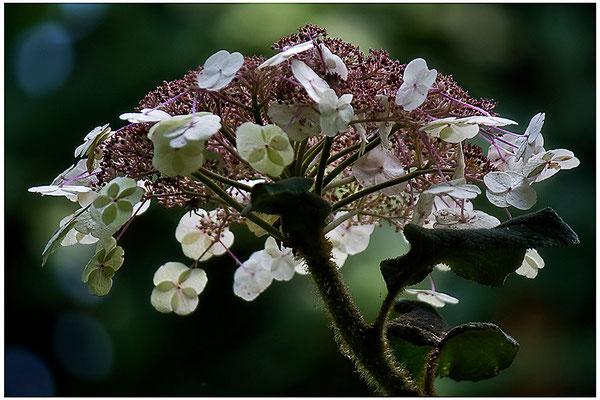 Gut beschirmt - © Helga Jaramillo Arenas - Fotografie und Poesie / September 2012