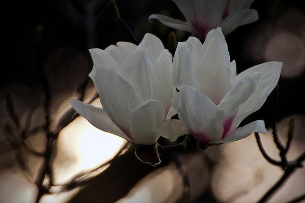 Gehalten vom Licht in der Dunkelheit - © Helga Jaramillo Arenas - Fotografie und Poesie / April 2015