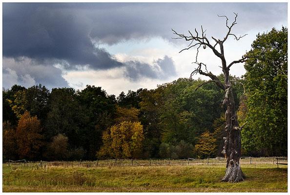 Das herannahende Unwetter - © Helga Jaramillo Arenas - Fotografie und Poesie / November 2012