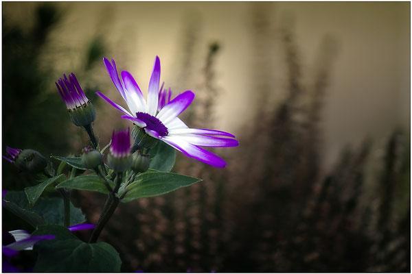 Sonnentanz - © Helga Jaramillo Arenas - Fotografie und Poesie / März 2014