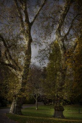 Die bewegten Bäume - © Helga Jaramillo Arenas - Fotografie und Poesie / November 2017