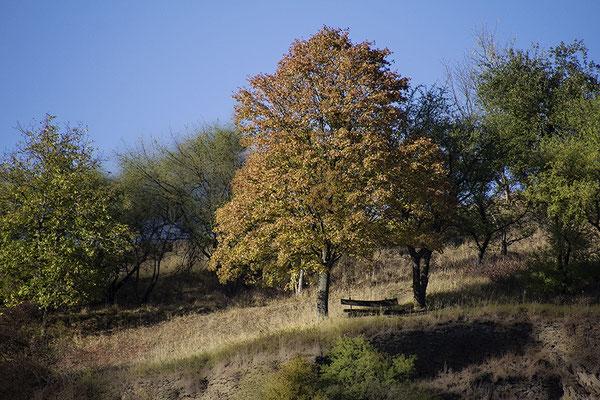 Die Stille des Herbstes - © Helga Jaramillo Arenas - Fotografie und Poesie / Oktober 2018