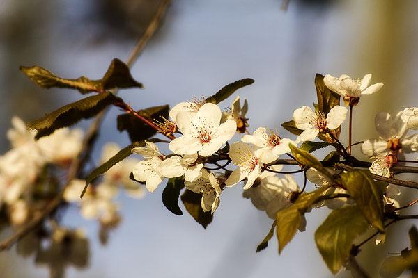 Tanz der Blüten - © Helga Jaramillo Arenas - Fotografie und Poesie / März 2020