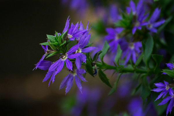 Blaue Wunder - © Helga Jaramillo Arenas - Fotografie und Poesie / August 2015