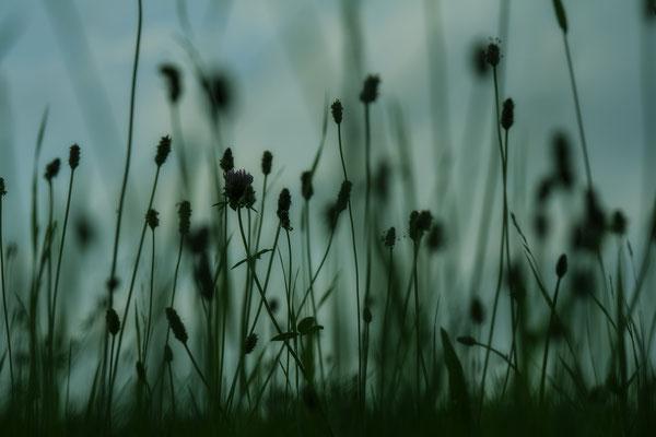Umhegt vom Licht (1) - © Helga Jaramillo Arenas - Fotografie und Poesie / August 2016