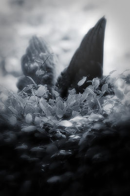 Und halten sich stets verborgen - © Helga Jaramillo Arenas - Fotografie und Poesie  / Juni 2015