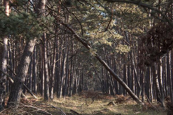 Der Wald  (2) - © Helga Jaramillo Arenas - Fotografie und Poesie / Oktober 2018