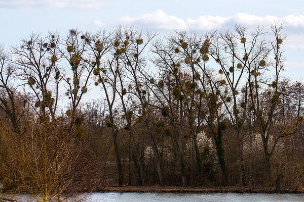 Die Wärme des Frühlings -  © Helga Jaramillo Arenas - Fotografie und Poesie / April 2021