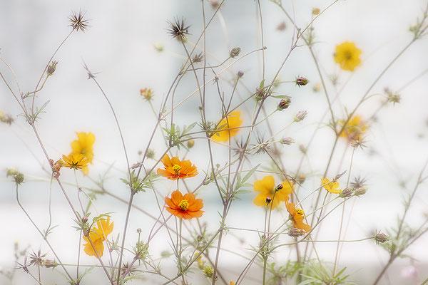 Frische - © Helga Jaramillo Arenas - Fotografie und Poesie / Mai 2018