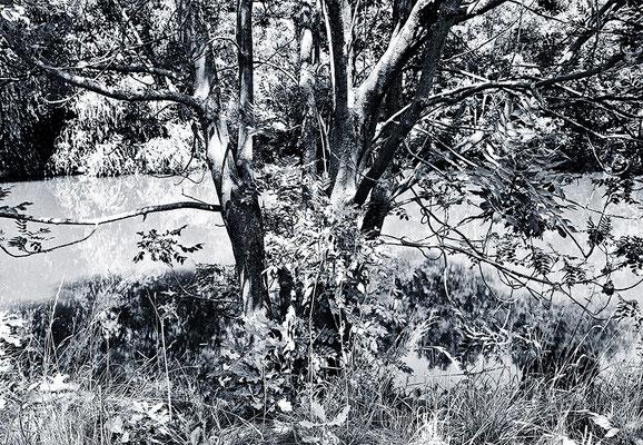 Die Seele der Bäume - © Helga Jaramillo Arenas - Fotografie und Poesie / April 2012