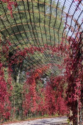 Umschlossen vom Herbst - © Helga Jaramillo Arenas - Fotografie und Poesie / Februar 2018