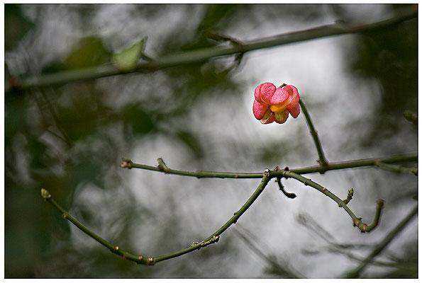 Standhaft - © Helga Jaramillo Arenas - Fotografie und Poesie / November 2012