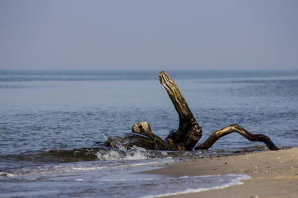 Der Schwimmer - © Helga Jaramillo Arenas - Fotografie und Poesie / Oktober 2018