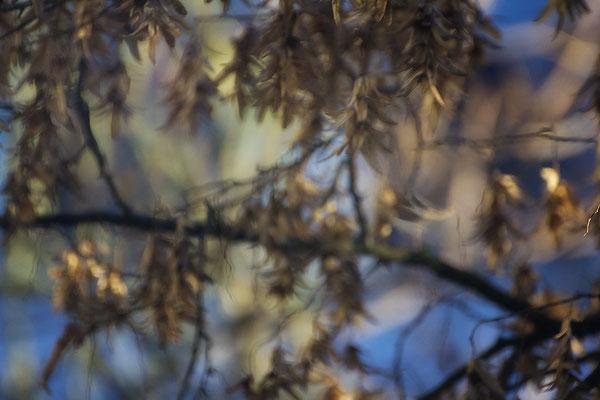 In den Herbst geträumt - © Helga Jaramillo Arenas - Fotografie und Poesie / Januar 2017