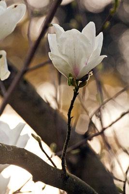 Wärmendes Licht - © Helga Jaramillo Arenas - Fotografie und Poesie / Mai 2015