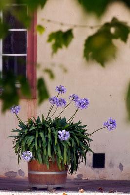An einem Sommertag / Bad Homburg v. d. Höhe - © Helga Jaramillo Arenas - Fotografie und Poesie / Juli 2015