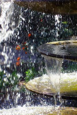 ...und es regnet rote Rosen - © Helga Jaramillo Arenas - Fotografie und Poesie / Mai 2015