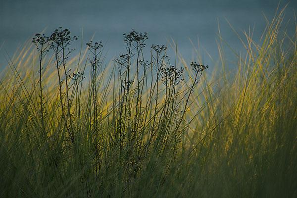 In den Dünen - © Helga Jaramillo Arenas - Fotografie und Poesie / Oktober 2018