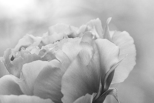 Vom Frühling geschickt (6) - © Helga Jaramillo Arenas - Fotografie und Poesie / April 2017