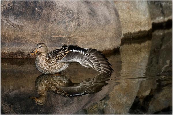 In Balance - © Helga Jaramillo Arenas - Fotografie und Poesie / Oktober 2012