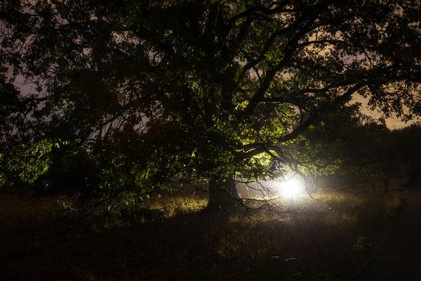 Das Licht - © Helga Jaramillo Arenas - Fotografie und Poesie / September 2018