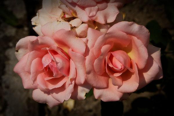 Üppigkeit - © Helga Jaramillo Arenas - Fotografie und Poesie / August 2015