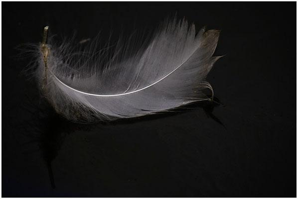 Mit Leichtigkeit - © Helga Jaramillo Arenas - Fotografie und Poesie / Oktober 2012