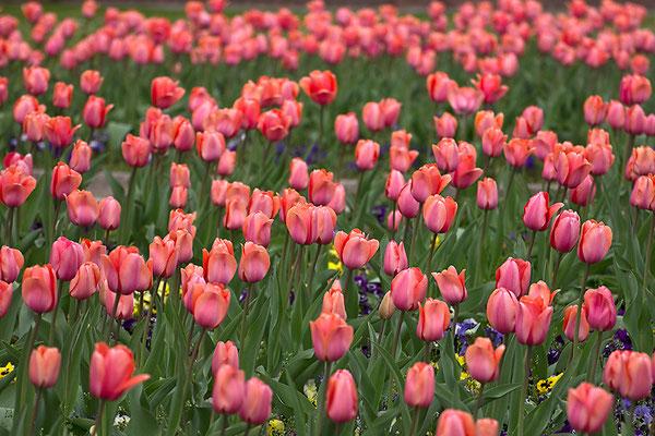 Frühlingsreigen - © Helga Jaramillo Arenas - Fotografie und Poesie / Mai 2015